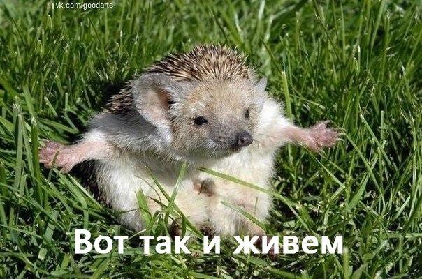 vot_tak_i_zhiviom_iozhik