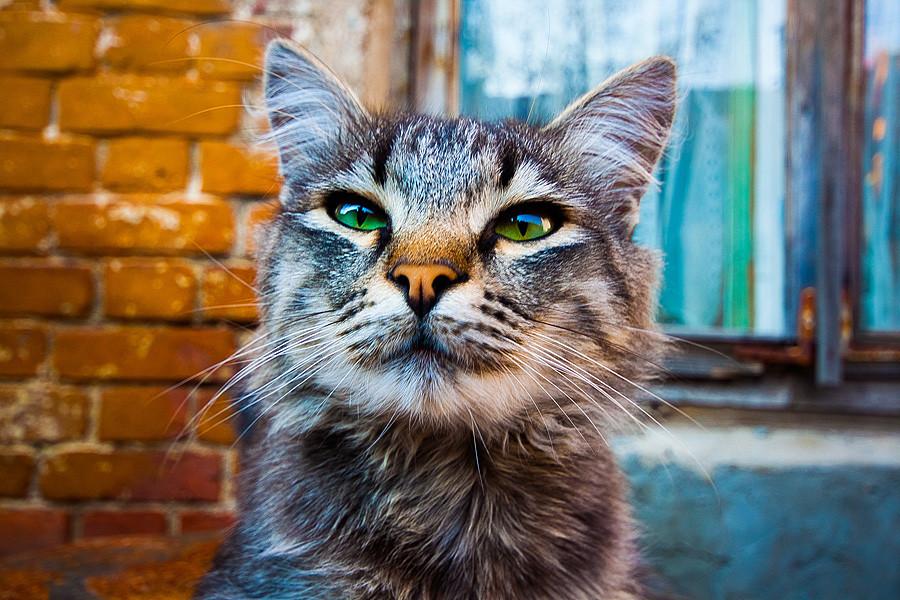 Объектив совсем не портретный - лица крупным планом искажает, хотя коты не против))