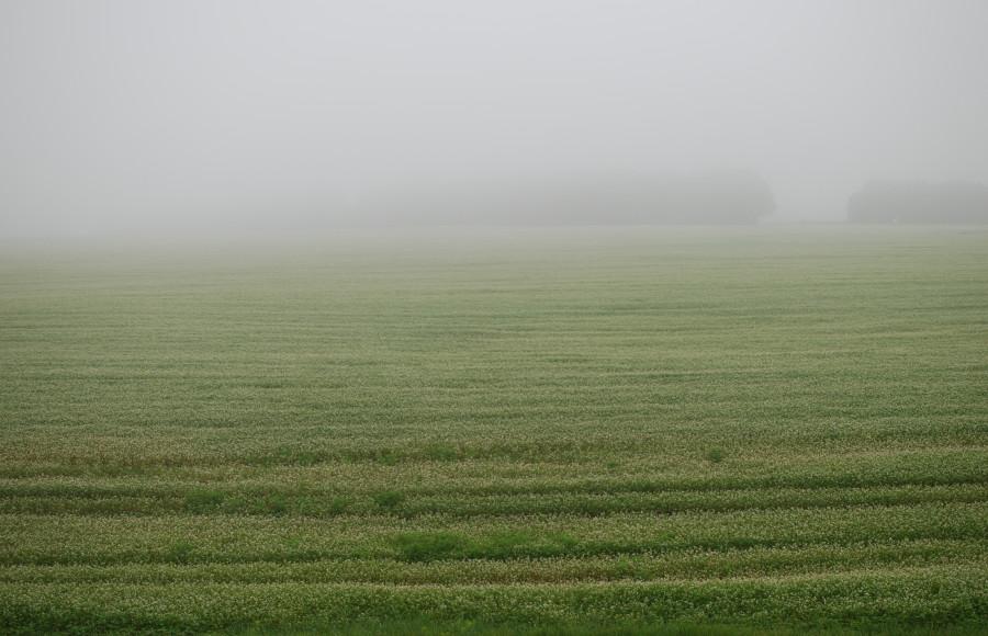 Grass.Fog.
