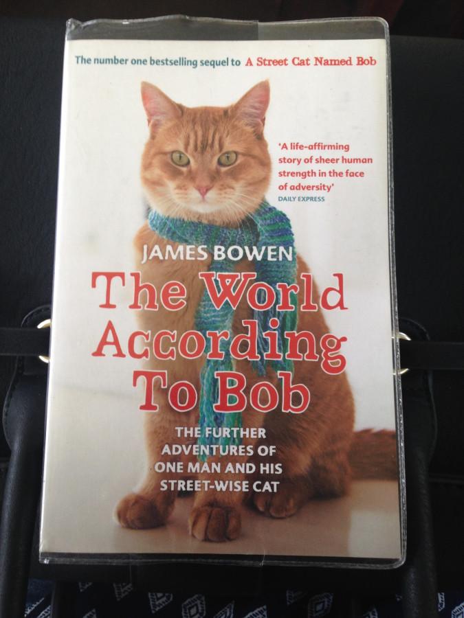 Секс с котом расказы 18 фотография