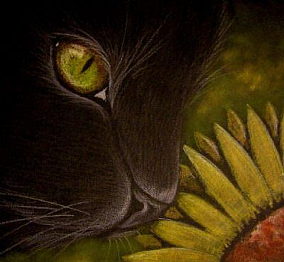 Black cat and Sunflower.jpg