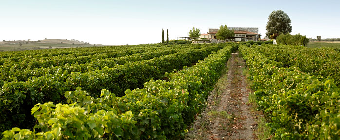 виноградник Геровасилиу