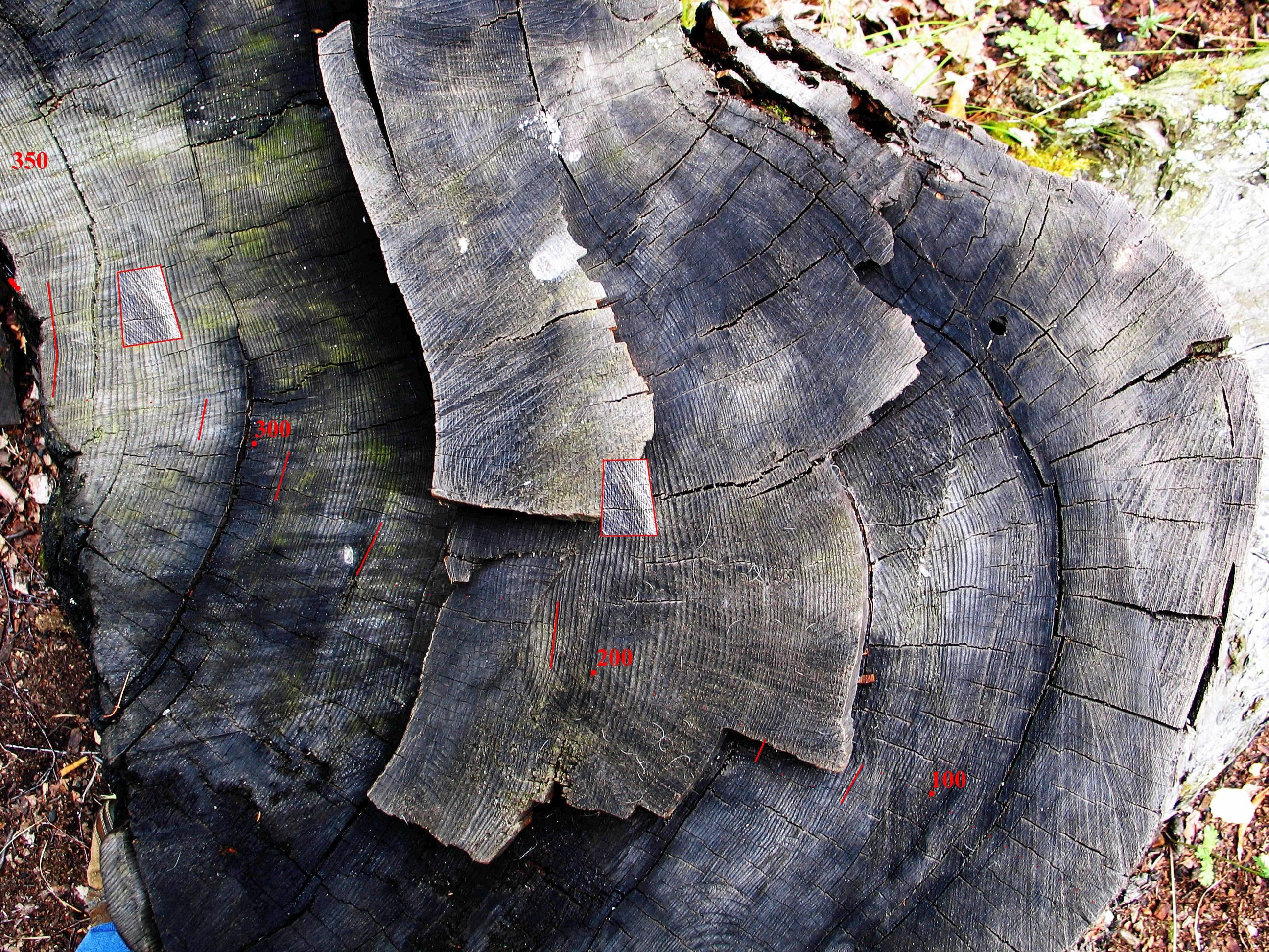 _дерево контраст_резк_счет_даты_уменьш