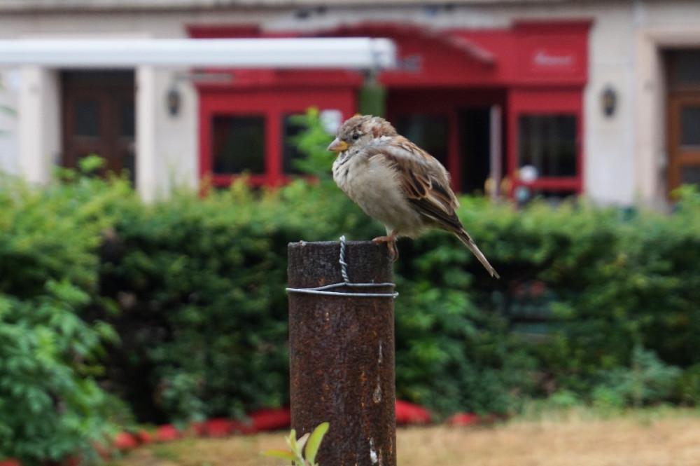 птиц1