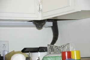 Zeke in the Cabinets
