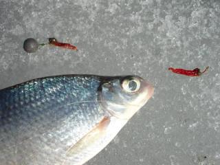 Подглядел на рыбалке