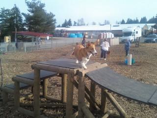 Dog park, taken by james