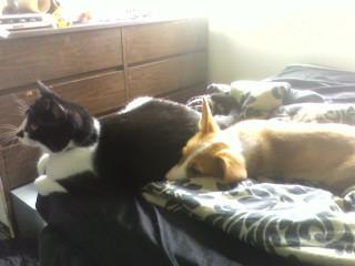 Simon let leon lay down next to him for a little bit