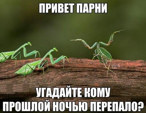 Размножение как смысл жизни. В чём я не согласен со Станиславом Дробышевским