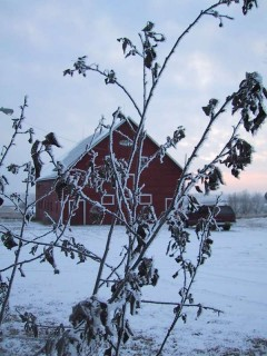 BLOOD RED BARN