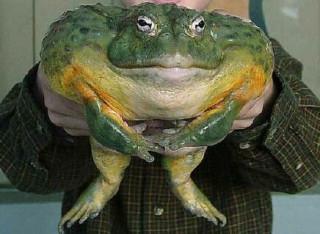 scolopendroom - Мои любимые меланхоличные жабы....