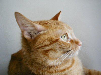 Newt Profile - 10/9/04