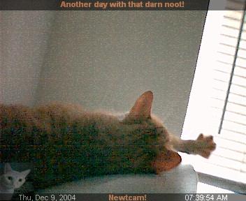 http://pics.livejournal.com/scottobear/pic/0003yy09