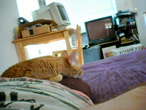 Shortly after, Naptime. 1/30/05