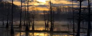 Bayou-Sunrise-Louisiana-©-Shrafnsson-Dreamstime-21155472-e1421425417445-1000x399