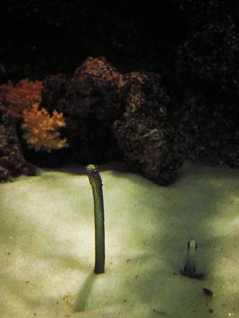 Другой Бангкок. Часть вторая - аквариум Ocean World