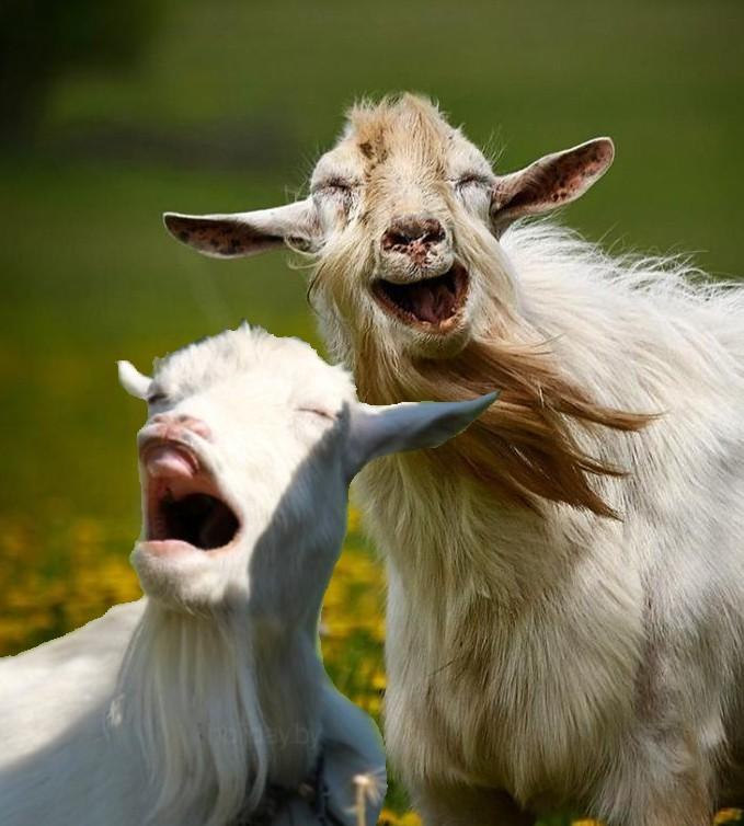 смешные фото про козлов