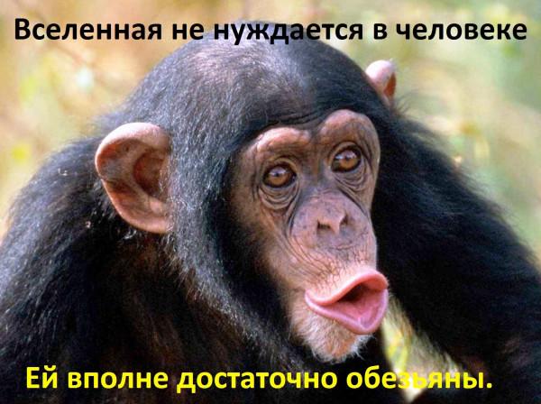 ape_large - копия