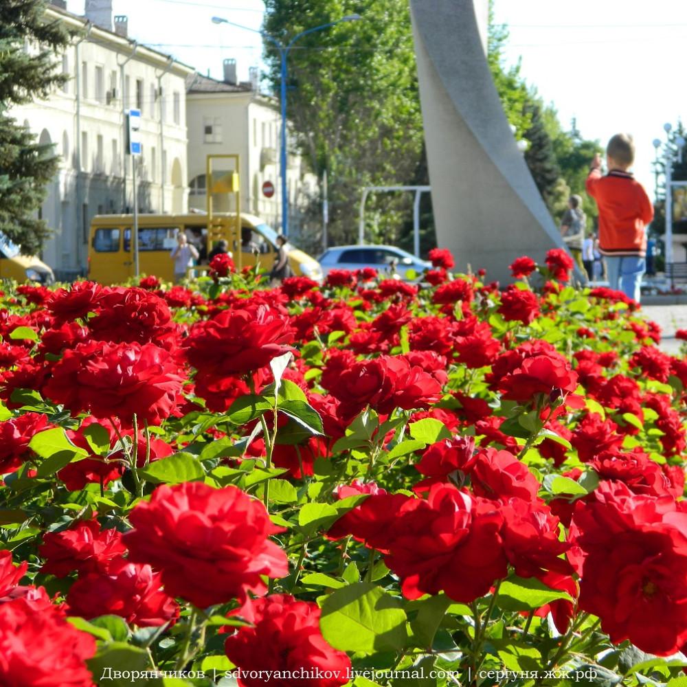 Волжский - ДК ВГС 7 июня розы (1) инста.JPG