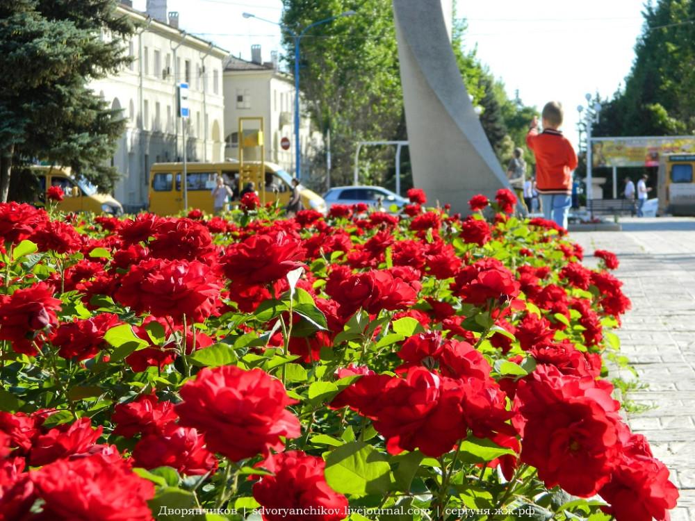Волжский - ДК ВГС 7 июня розы (4).jpg