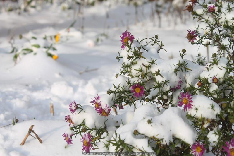 (1) У подъезда, цветы дождались чистого и белого осеннего снега) \\ Возможен ли первый снег в третий раз?