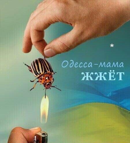 Полиция нашла три гранаты в подземном переходе возле Куликового поля в Одессе - Цензор.НЕТ 5064