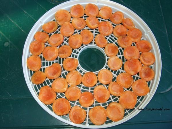 сушка абрикосов