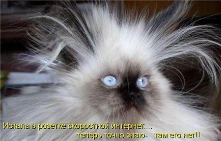 кот в сети