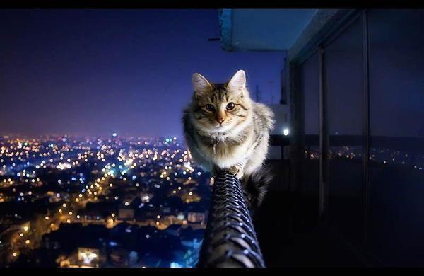 кот вечером