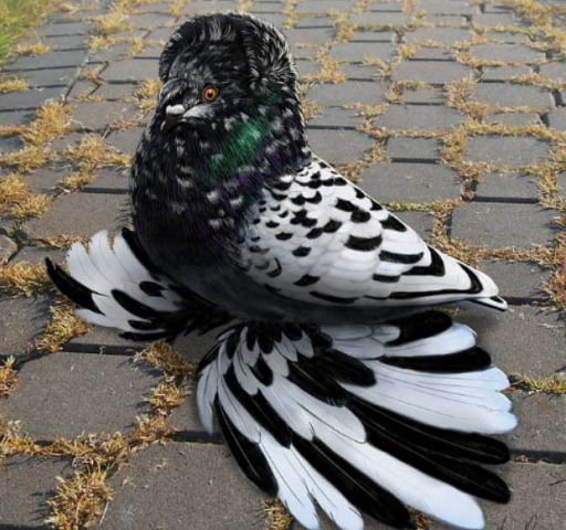 чудо-птица
