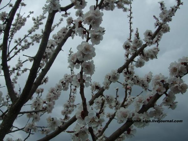 цветение 2
