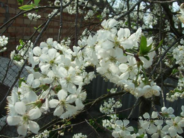цветение 3