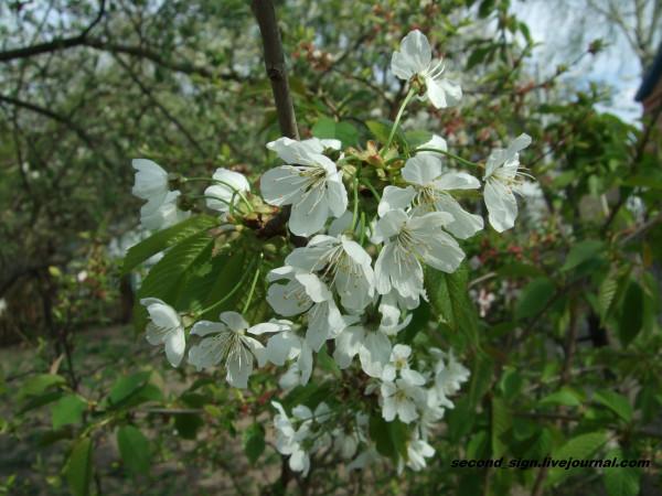 цветение 4