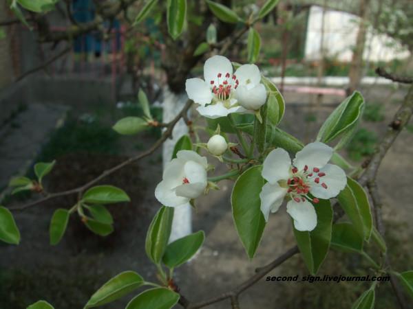 цветение 5