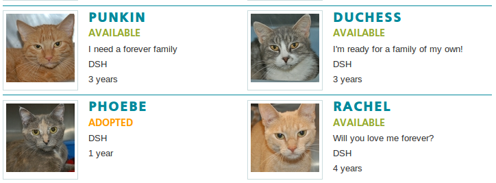 Sunspot Adopted