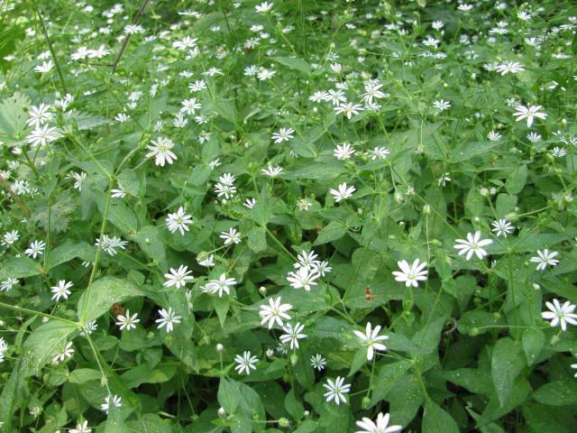 В лесу красивые цветы