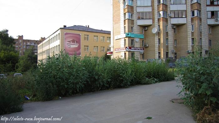 Джунгли для аллергиков на проспекте Ленина