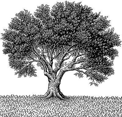Olive_Tree_large