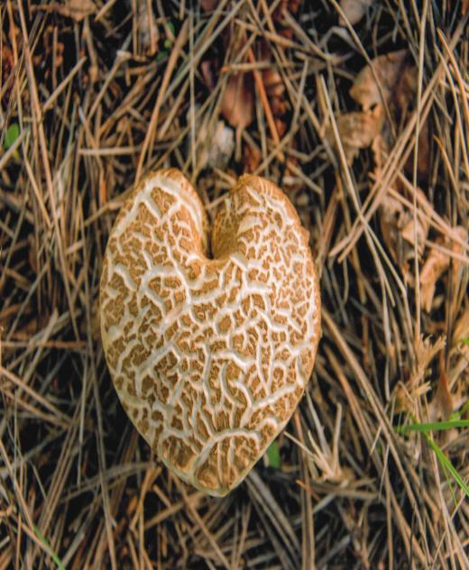 "SECOND PLACE""A Hearty Mushroom""Fred GuthrieHuntsville, TX.jpg"