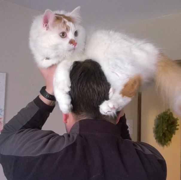 6  cat-hat-funny-52.jpg
