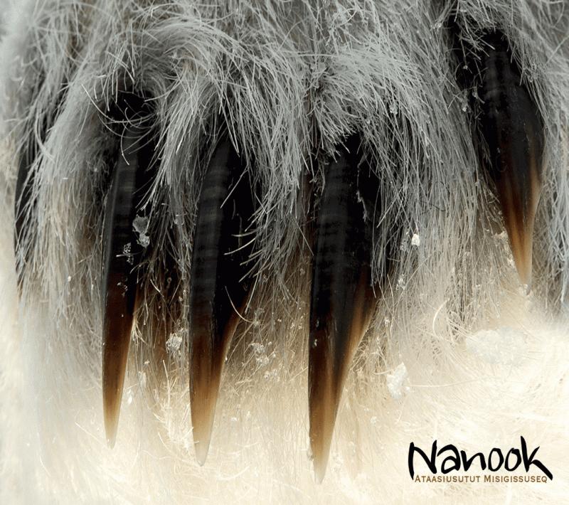 Nanook - Ataasiusutut Misigissuseq front1521814841.2776.png