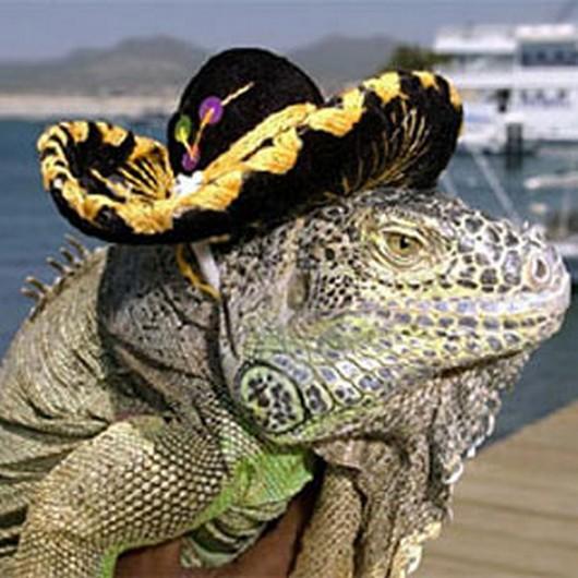 cute-animals-in-sombreros-006.jpg