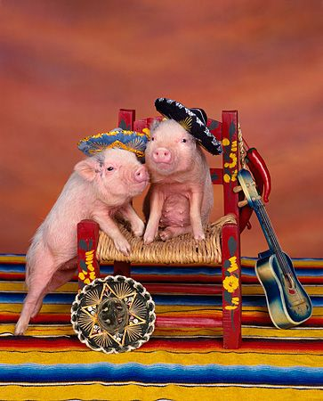 654baa4b3f30203da466f3550c8634cf--pocket-pig-this-little-piggy.jpg