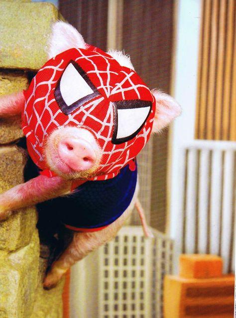 dda411328485a44aa9cfb31b265fab74--teacup-pigs-mini-pigs.jpg