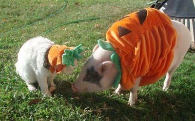 fea097203018971cb48dcfd9e73dc23a--halloween-costume-ideas-happy-halloween.jpg