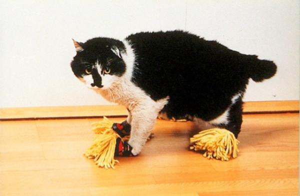 cat-mop.jpg