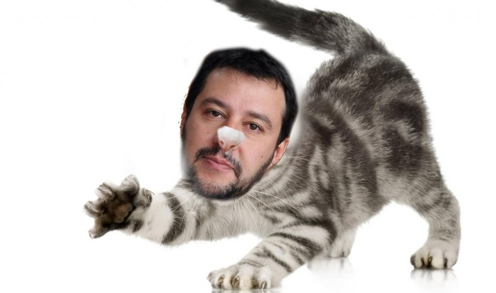 10  Gattini-per-Salvini.jpg