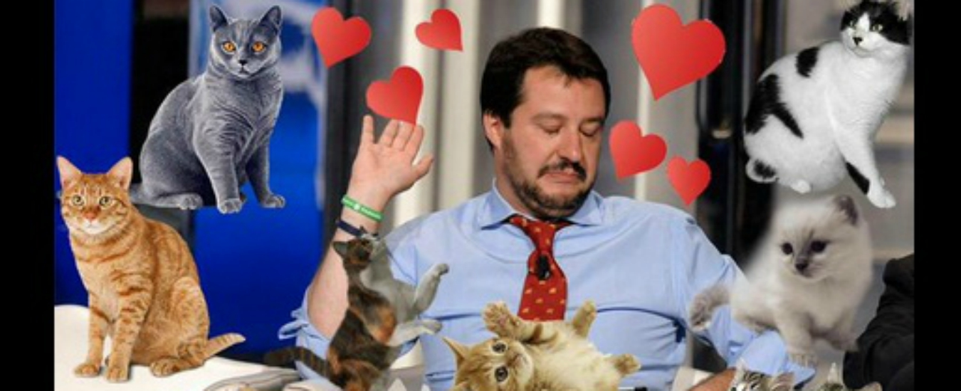 11  Gattini-per-Salvini.jpg