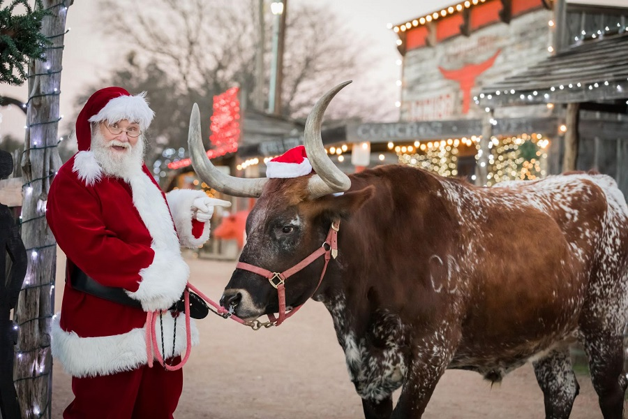 _900 x 600 Texas-Longhorn-Old-West-Christmas-Light-Fest.jpg