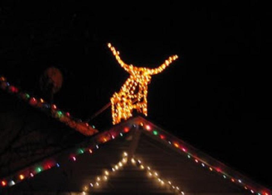 7 texas-longhorn-xmas.jpg